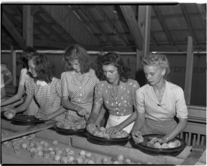 Grading and packing peaches - Marshallville. College of Agriculture and Environmental Sciences (CAES) Photograph Collection, University Archives, Hargrett Library, University of Georgia, Athens, Georgia.