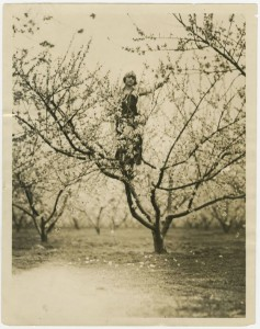 Photograph of Audrey Fagan in Blooming Peach Tree During Peach Festival, Fort Valley, Peach County, Georgia, 1924. Peach Public Library, Fort Valley, Georgia.