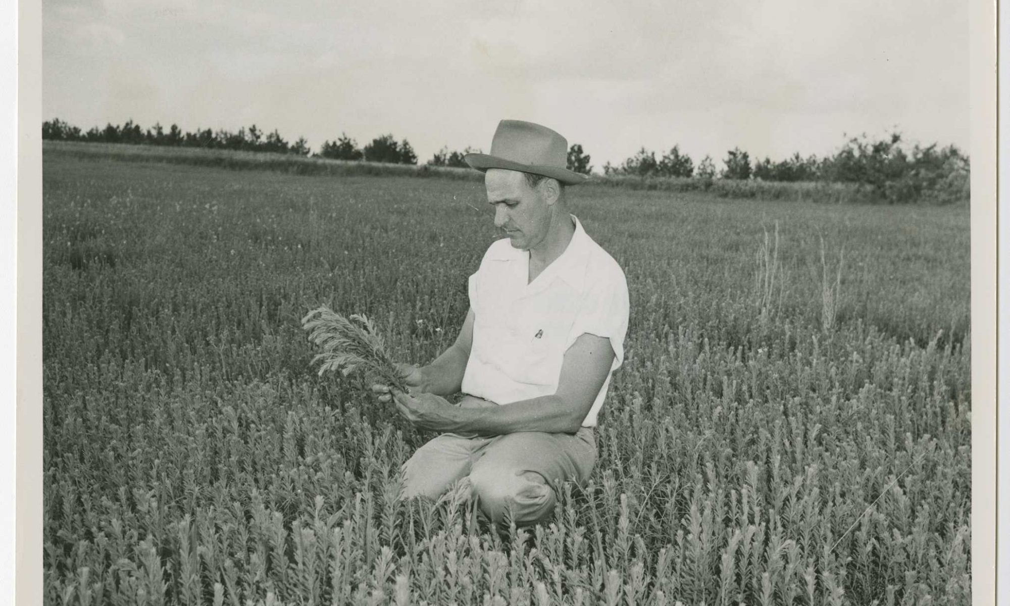Photograph of a farmer kneeling in a field of Sericea Lespedeza for hay and pasture, Columbia County, Georgia